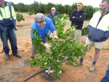 Workshops Sunraysia Citrus Growers